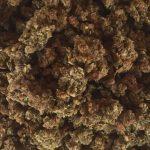 Beet-E-Bites – Medicinal Cookie Crumblers