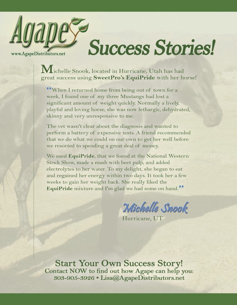 horse_michellesnook_testimonialfinal
