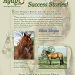 Horses: Starlight Farms Stallions Success Story