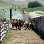 Horses: Colorado Cattle Company Success Story