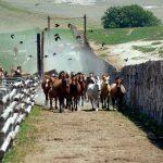 Horses: Colorado Cattle Company Success Story