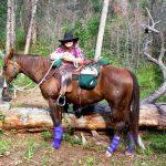 Horses: Elaine Morgan Trail Horse Success Story