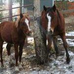 Horses: Foals Success Story