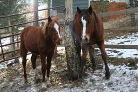 foster-foals1