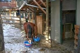 foster-foals2