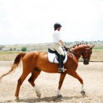 Horses: Una Schade and Fritz Success Story