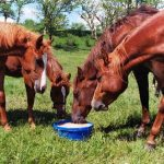 Horses: Science of EquiPride