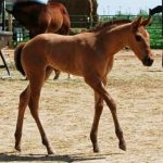 Horses: Starlight Farms Mares and Foals Success Story