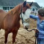 Horses: Mikayla 4-H SweetPro/EquiPride Sponsorship