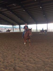 sharon-horse