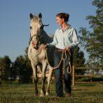 Horses: Healing After Laminitis