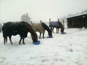 winter_horses_monika-courtney