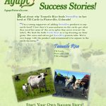 Cattle: TR Cattle Success Story