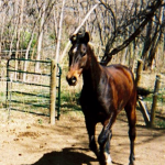 Horses: Testimonial from a Hard Keeper
